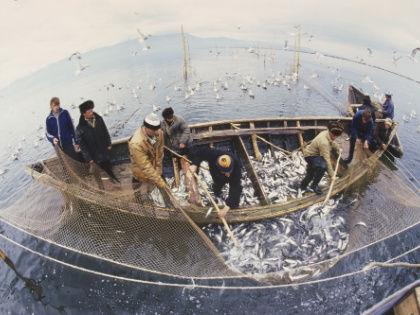 Между рыбаками и береговыми переработчиками давно идет борьба // Global Look Press