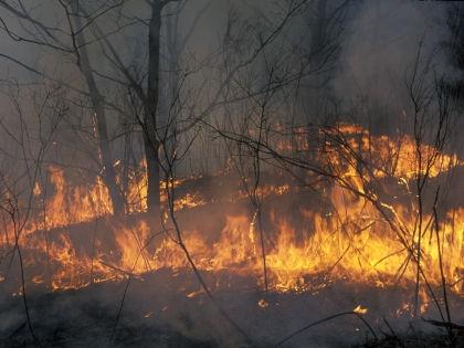 Площади лесных пожаров на Дальнем Востоке снова бьют рекорды // Константин Михайлов / Global Look Press