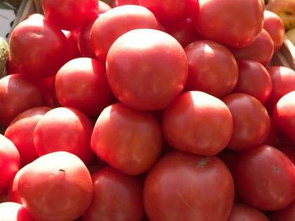 «Я под томаты в лунку добавляю компост, полученный из растительных и кухонных отходов плюс горстку двойного суперфосфата...» // Global Look Press
