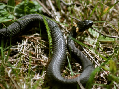 Змеи вполне могут наведаться к вам на дачный участок // Global Look Press