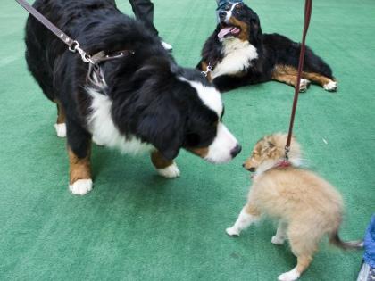 Не стоит заводить породы, которые не предназначены быть просто любимцами, диванными собаками // Global Look Press