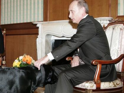 Владимир Путин и лабрадор Конни // Global Look Press