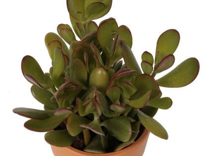 Очень важно разместить купленное растение в правильном, с точки зрения феншуй, месте // Global Look Press