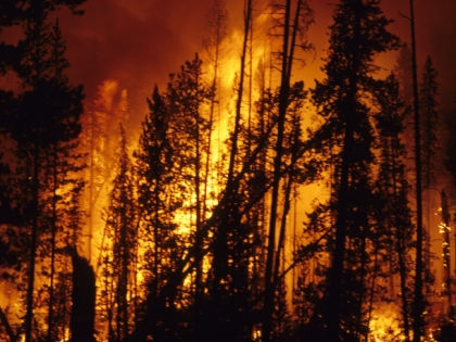 Читатели «Собеседника» уверены: в распространении пожаров виноваты власти // Global Look Press