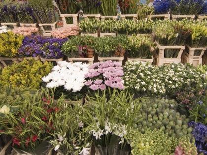 Голландские цветы будут изучаться более тщательно // Global Look Press