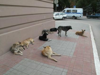 Всех собак начали убивать, убивать и собак, гуляющих с ошейником, и даже щеня // Global Look Press