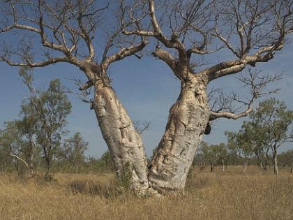Деревья истребят людей // Global Look Press