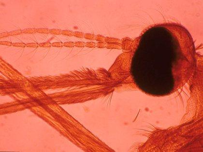 Разработана новая методика борьбы с опасным для здоровья людей паразитом // Global Look Press