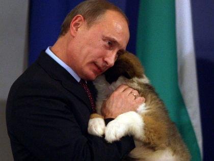 Владимир Путин и подаренная собака // Global Look Press