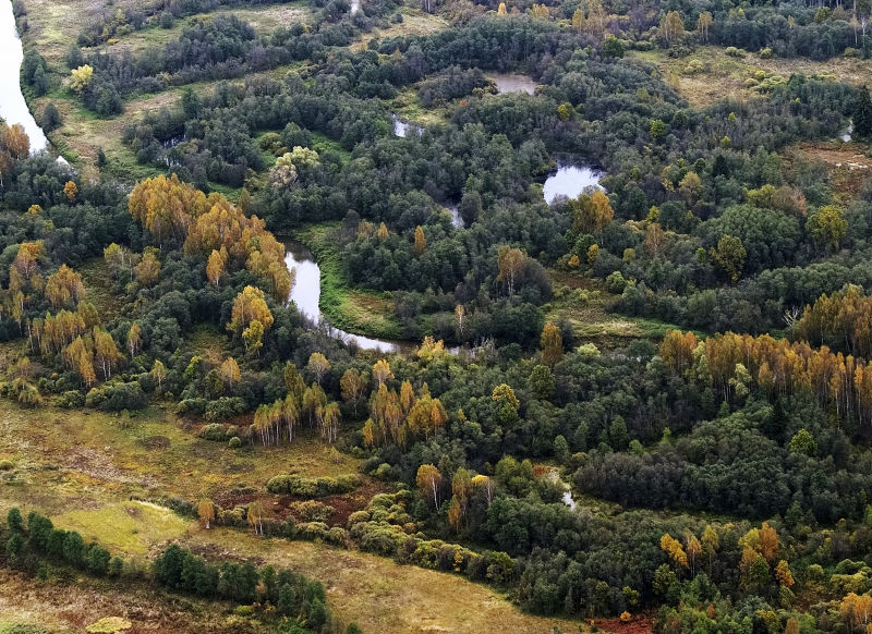За продажу участка леса преступники понесут уголовное наказание // Dmitry Vol/Global Look Press