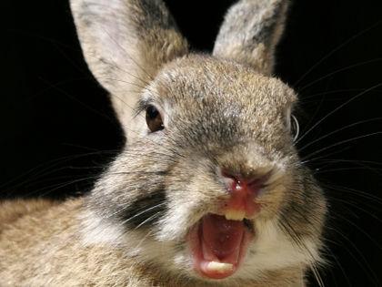 Убийство кролика в эфире // Global Look Press