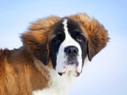 «Собака является членом семьи, и самое главное — любовь к ней, а не квадратные метры...» // Global Look Press