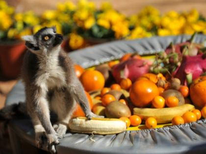 Весной живешь в ожидании свежих фруктов и овощей // Global Look Press