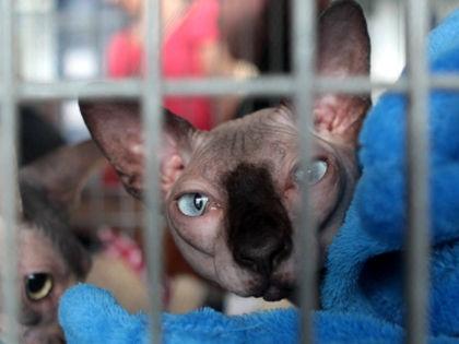 Кот стал жертвой разбирательств между ФСПП и злостным неплательщиком // Global Look Press