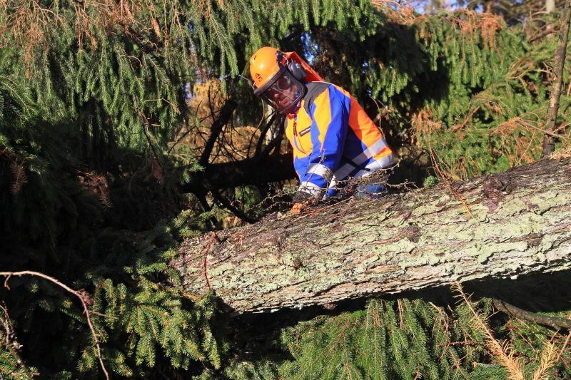В центре Москвы упало дерево // Global Look Press