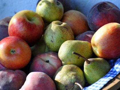 Найден простой и недорогой способ сделать фрукты безопасными // Global Look Press