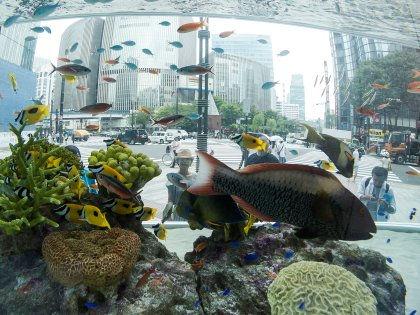 Наблюдение за аквариумом успокаивает психику и снижает давление // Global Look Press
