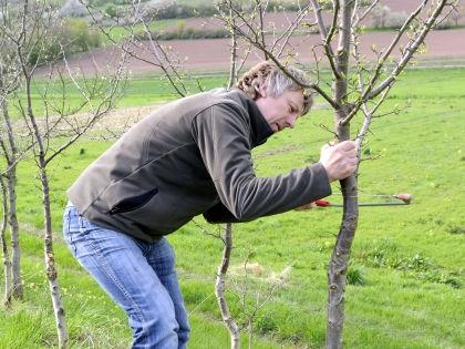 Прививание фруктового дерева может освоить даже садовод-любитель // Global Look Press