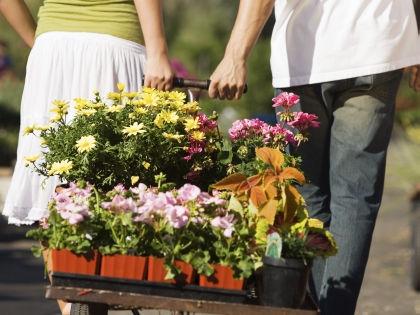 Не бойтесь сажать уже цветущие растения // Global Look Press
