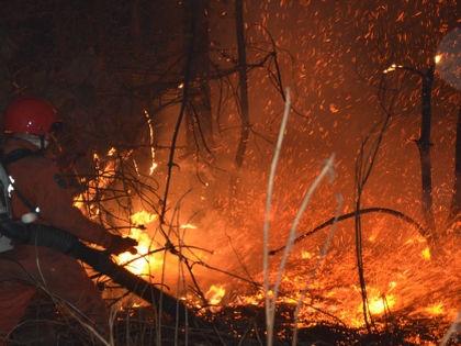 Пожары, подступившие к Чернобылю // Global Look Press