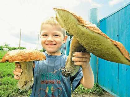 Можно отравиться и вполне приличными грибами // Global Look Press