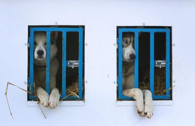 Это уже второе уголовное дело в Чите по факту нападения бродячих собак на школьников // Global Look Press