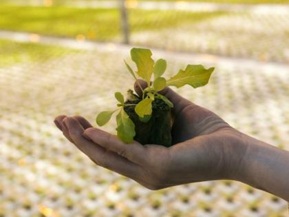 Высаживать рассаду лучше в пасмурную погоду или вечером в увлажненную почву // Global Look Press