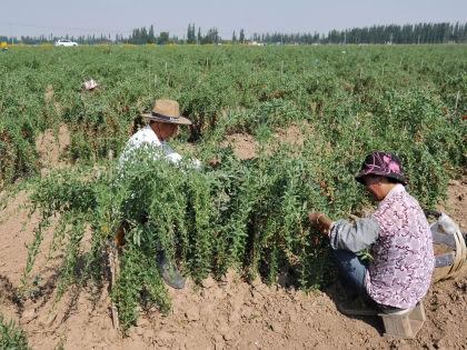 Китайские фермеры // GLobal Look Press