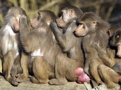 Люди спят намного меньше обезьян благодаря своей эволюции // imago stock&people / Global Look Press