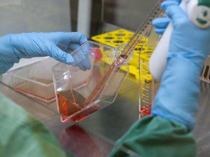 В лечении диабета наука скоро станет использовать уникальные клетки Супермена // Daniel Bockwoldt / Global Look Press
