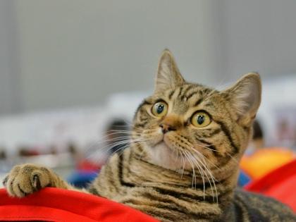 Хозяин далеко не всегда понимает, как читать кошачьи намеки // Global Look Press