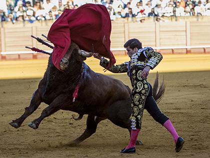 В Испании бык убил тореадора во время корриды // Даниель Гонзалес Акуна / Global Look Press