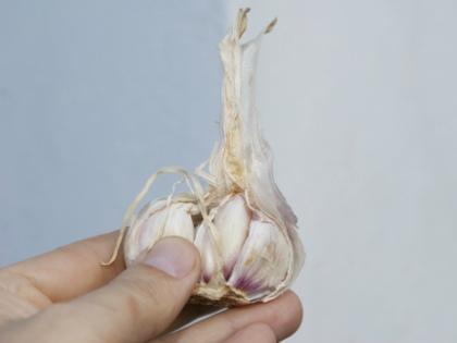 Чесночная шелуха полезных веществ содержат больше, чем то, что скрывается под ней // Global Look Press