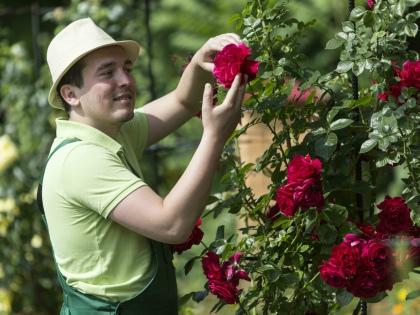 В цветниках начинается буйство красок, цветут и благоухают декоративные кустарники // Global Look Press