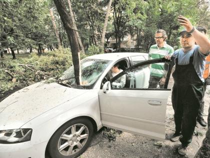 Желательно найти свидетелей, которые смогут подтвердить, что дерево было опасным // Global Look Press