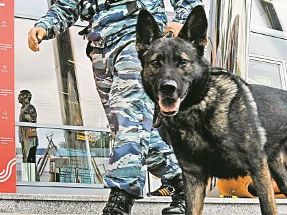 На служебных собаках, занимающихся обнаружением наркотиков и взрывчатки, в подразделении начали экономить // Global Look Press