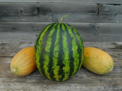 Обе ягоды способствуют омоложению, увлажняют кожу и придают энергию // Global Look Press
