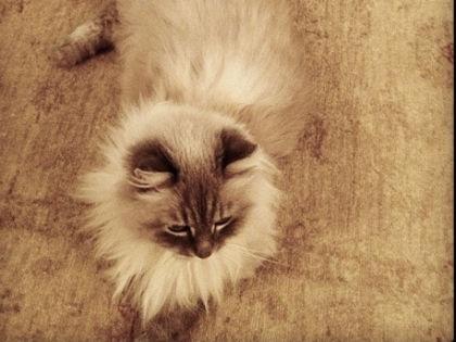 Кот дорофей+дмитрий медведев