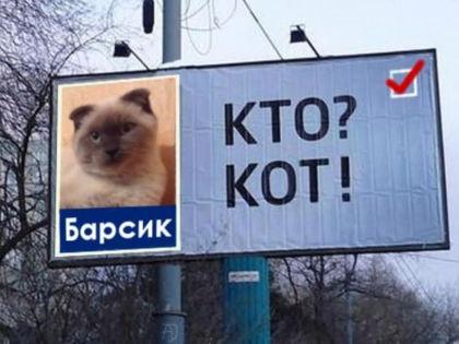 Кот Барсик // vk.com/altaionline
