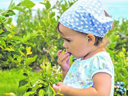 Девочка есть ягоды // Shutterstock