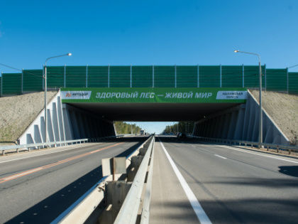 Инженерное сооружение через автомагистраль позволяет животным мигрировать в привычной для них среде обитания // Sobesednik.ru