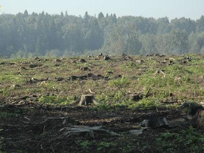 Комитет лесного хозяйства Московской области