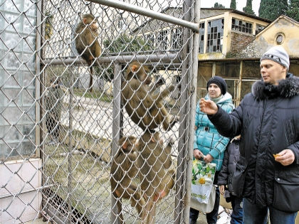 Чтобы прокормить приматов, НИИ вынужден пускать посетителей за деньги – но только в питомник // автора