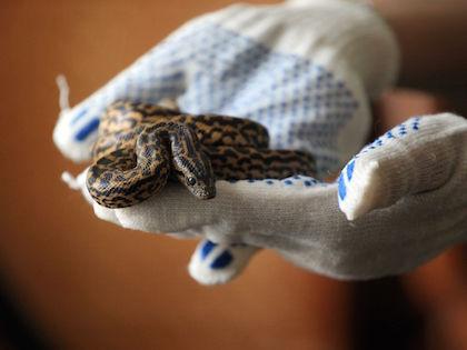 Коричневато-серое существо очень похоже на змею или гигантского дождевого червя, поскольку нет ног // Russian Look