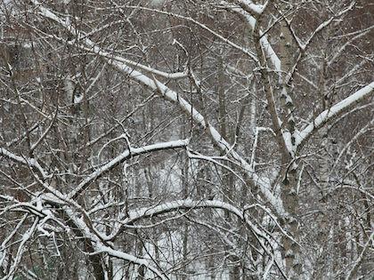 В Москве будет дождливая погода, а также мокрый снег по ночам //  Сергей Ковалёв / Russian Look