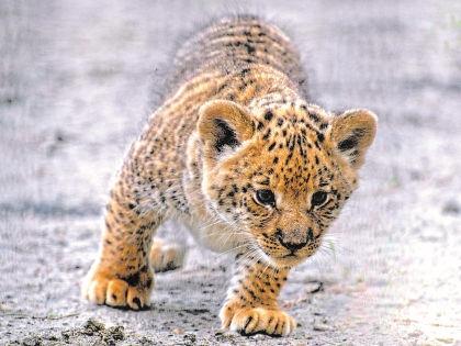 В дикой природе этот зверь не встречается // Pixanews