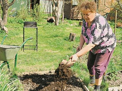 Важно, чтобы растение не только прижилось в огороде, но и постоянно получало подпитку // фотобанк «Лори»