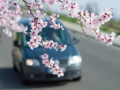 Весна - время чайников // Global Look Press