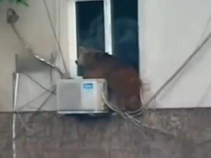 В результате наводнения из тбилисского зоопарка сбежали животные, в том числе хищники (на фото — медведь) // Кадр YouTube