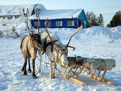 Санта-Клаус переводится на русский язык как Святой Николай, а Новосибирск назван в его честь // Russian Look